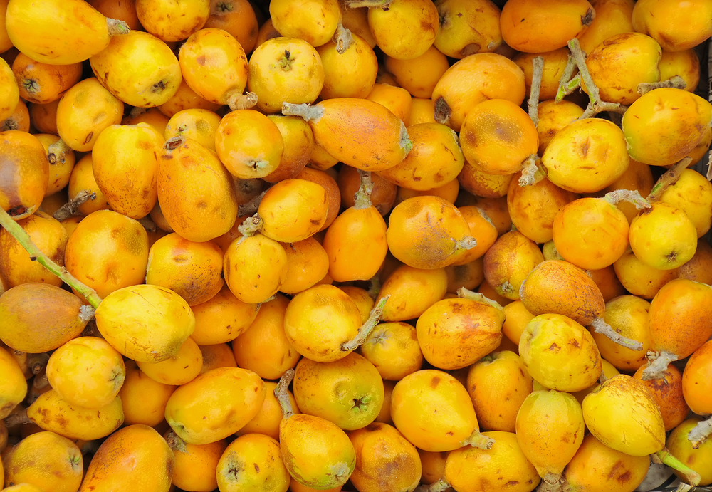 Marula oil in hair care – wonderful rejuvenating elixir